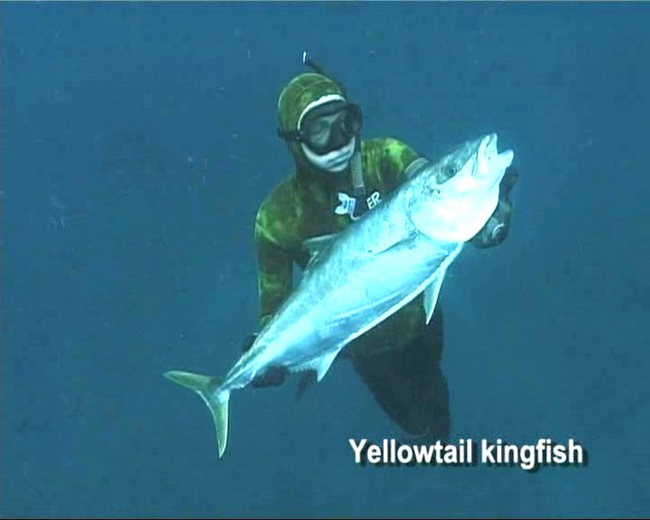 yellowtail_kingfish.jpg